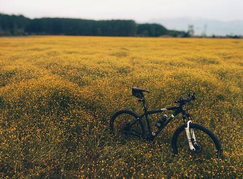 A mountain bike in the middle of a green and yellow meadow - Holiday apartment Hunsrück