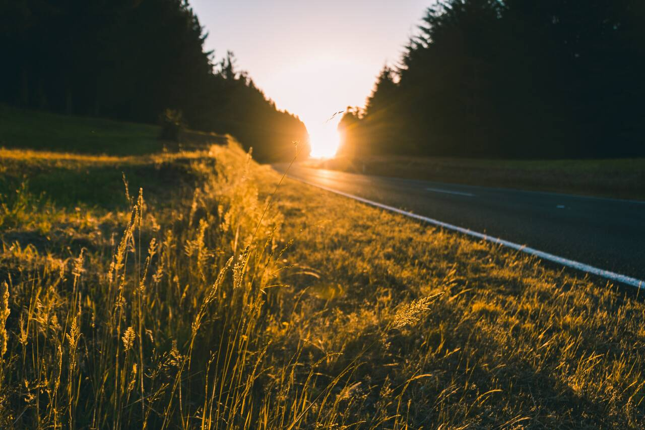 A road surrounded by long grass in Tongariro Holiday Park during golden hour - Holiday apartment Hunsrück