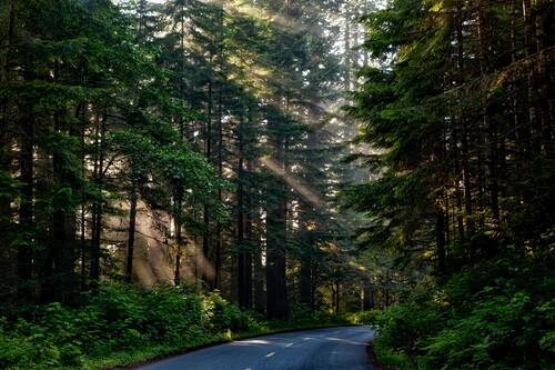 forest trees woods sunlight shaft of light landscape scenic nature outdoors redwoods beautiful road summer country countryside rural california hdr forest forest forest woods woods woods woods woods road road road - Ferienhaus am See Kastellaun